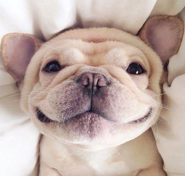 animal-cute-dog-funny-Favim.com-3159400