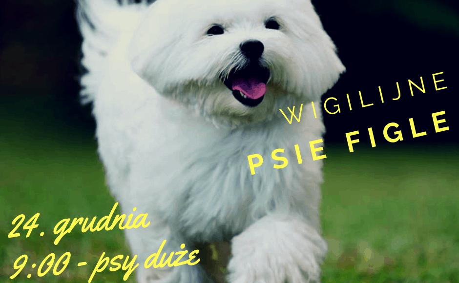www.psikurs.pl